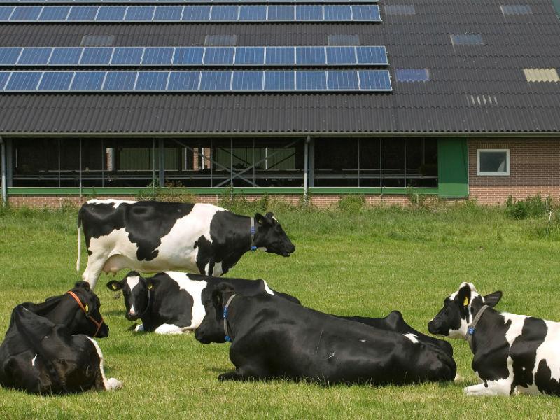 Fotowoltaika w rolnictwie